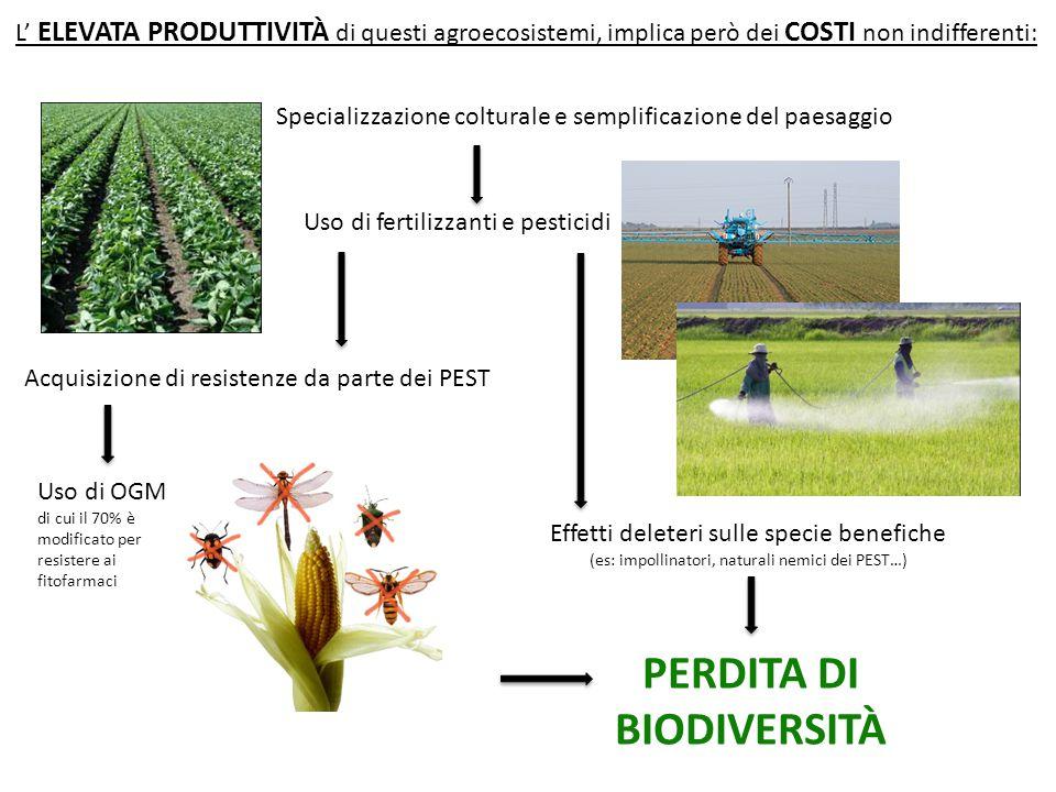 L' ELEVATA PRODUTTIVITÀ di questi agroecosistemi, implica però dei COSTI non indifferenti: Specializzazione colturale e semplificazione del paesaggio Uso di fertilizzanti e pesticidi Acquisizione di resistenze da parte dei PEST Effetti deleteri sulle specie benefiche (es: impollinatori, naturali nemici dei PEST…) Uso di OGM di cui il 70% è modificato per resistere ai fitofarmaci PERDITA DI BIODIVERSITÀ