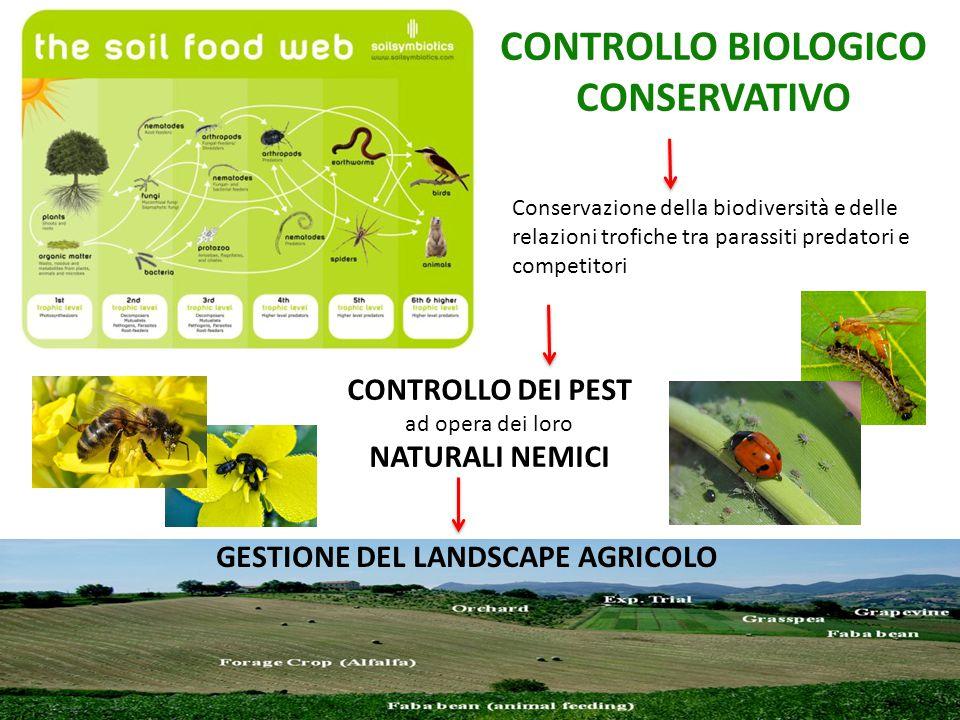 CONTROLLO BIOLOGICO CONSERVATIVO Conservazione della biodiversità e delle relazioni trofiche tra parassiti predatori e competitori CONTROLLO DEI PEST ad opera dei loro NATURALI NEMICI GESTIONE DEL LANDSCAPE AGRICOLO