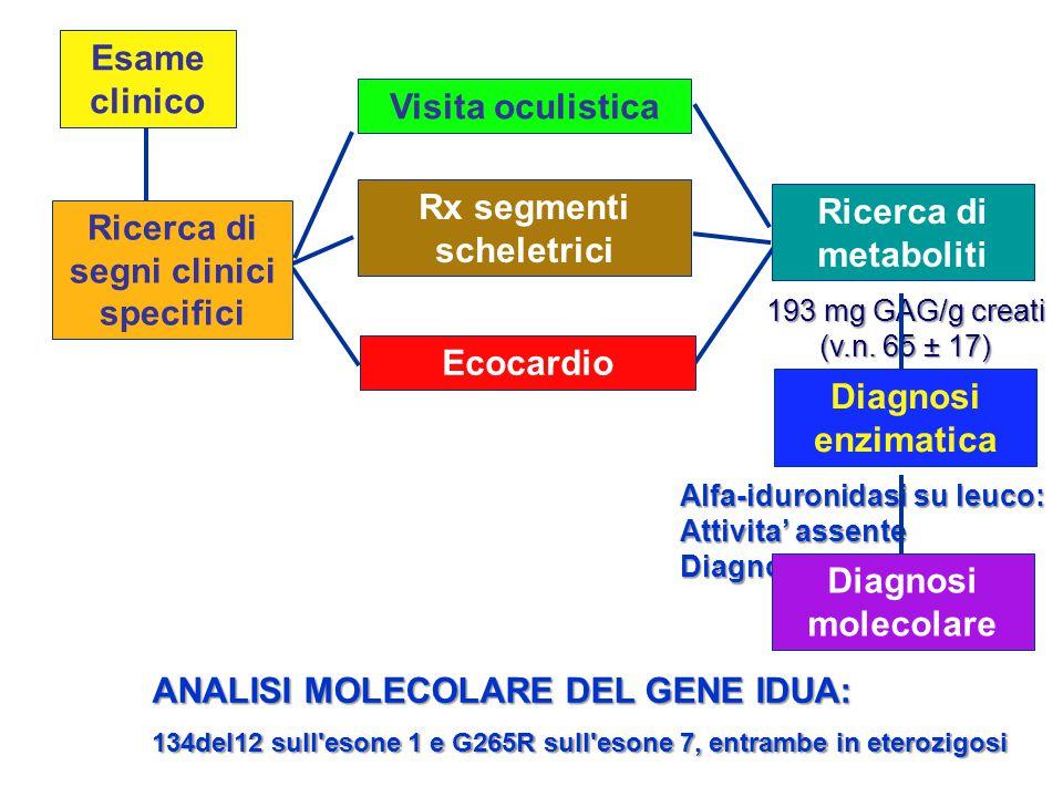 Esame clinico Ecocardio Visita oculistica Rx segmenti scheletrici Ricerca di segni clinici specifici Ricerca di metaboliti 193 mg GAG/g creati (v.n. 6