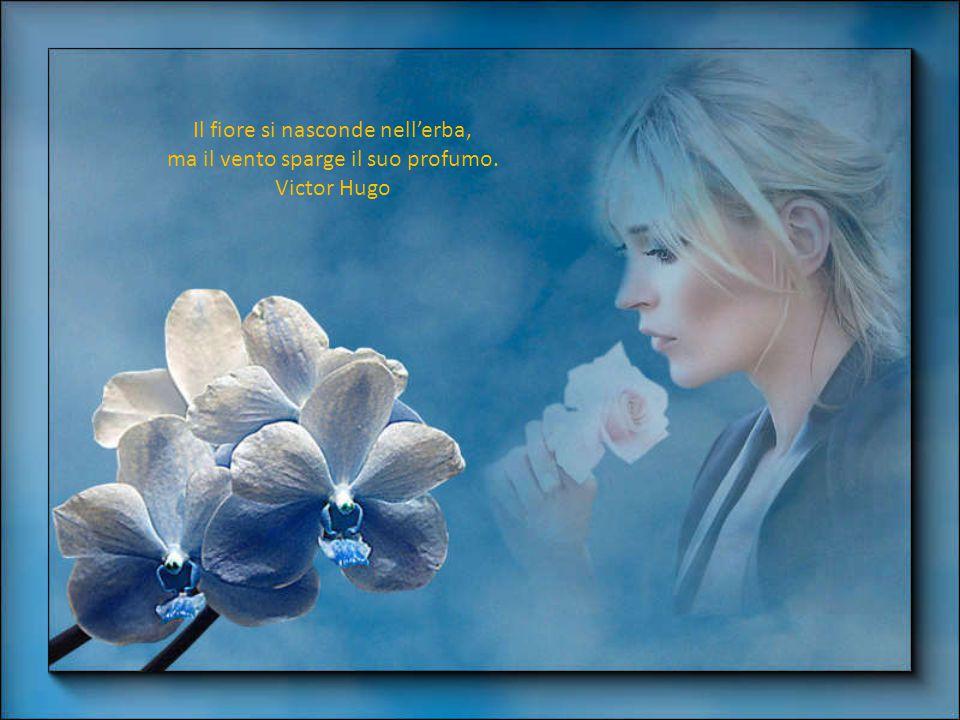 Il fiore perfetto è una cosa rara. Se si trascorresse la vita a cercarne uno, non sarebbe una vita sprecata. Katsumoto
