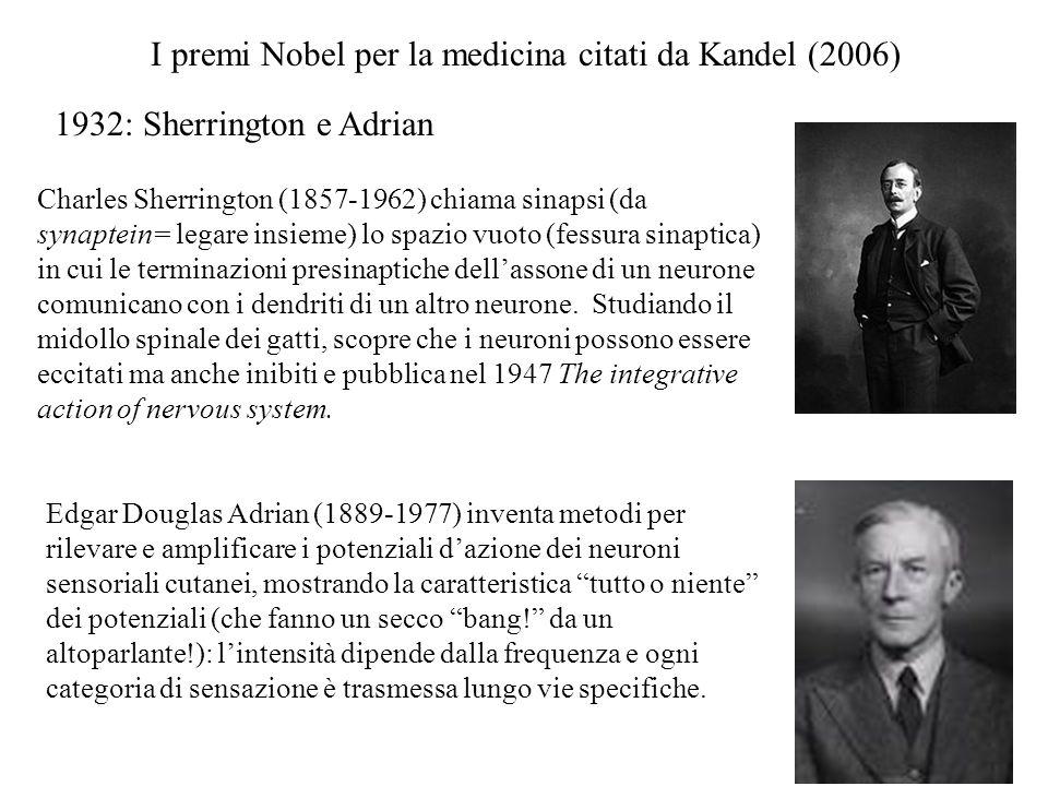 Edgar Douglas Adrian (1889-1977) inventa metodi per rilevare e amplificare i potenziali d'azione dei neuroni sensoriali cutanei, mostrando la caratter