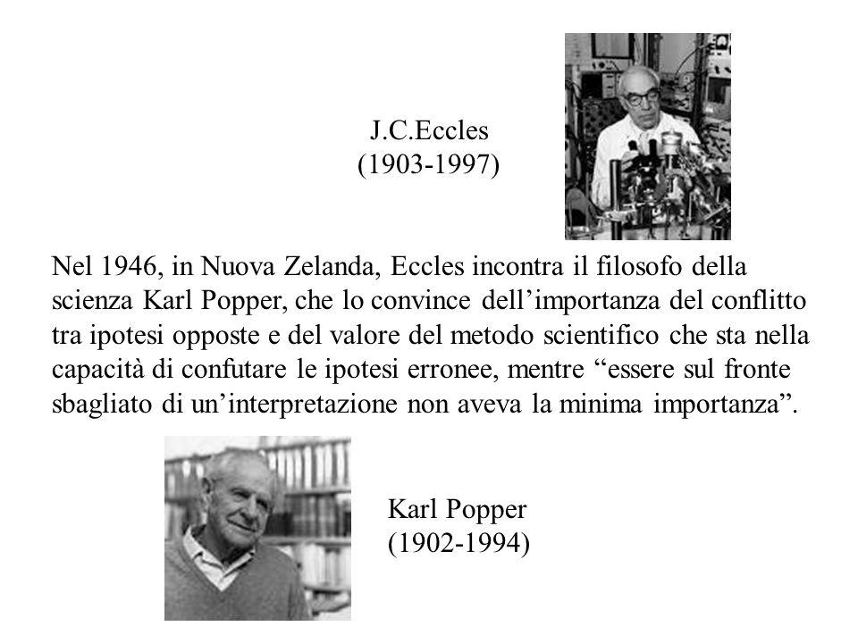 Nel 1946, in Nuova Zelanda, Eccles incontra il filosofo della scienza Karl Popper, che lo convince dell'importanza del conflitto tra ipotesi opposte e del valore del metodo scientifico che sta nella capacità di confutare le ipotesi erronee, mentre essere sul fronte sbagliato di un'interpretazione non aveva la minima importanza .