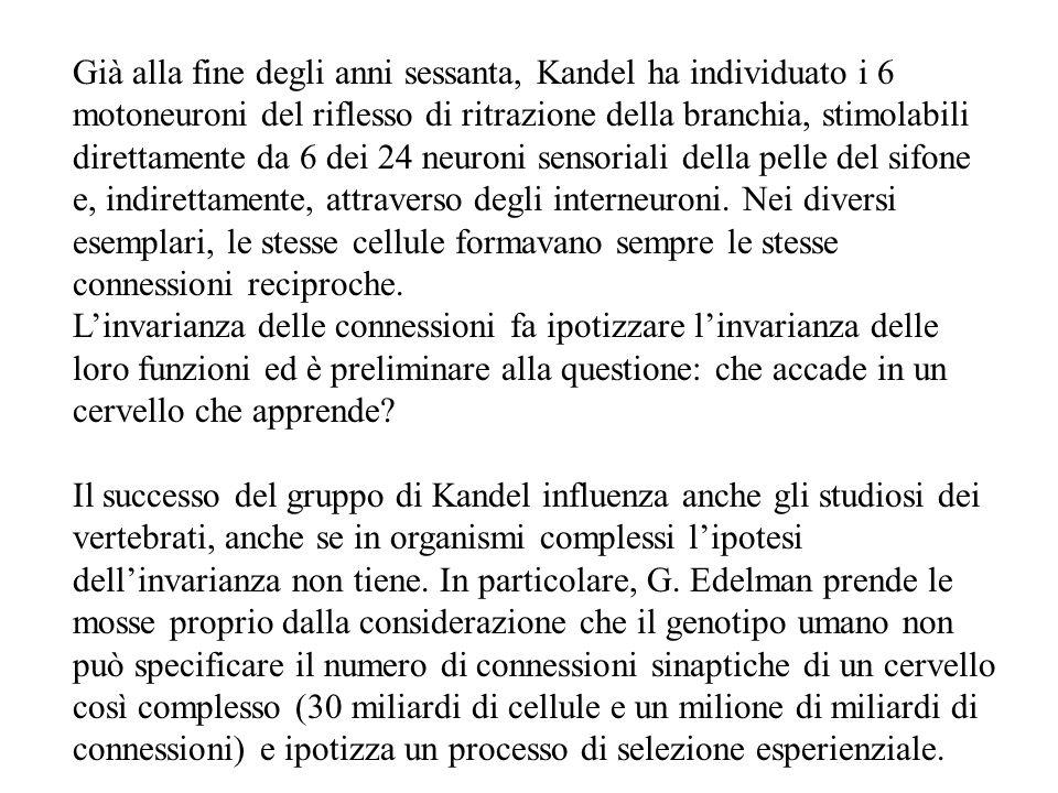 Già alla fine degli anni sessanta, Kandel ha individuato i 6 motoneuroni del riflesso di ritrazione della branchia, stimolabili direttamente da 6 dei