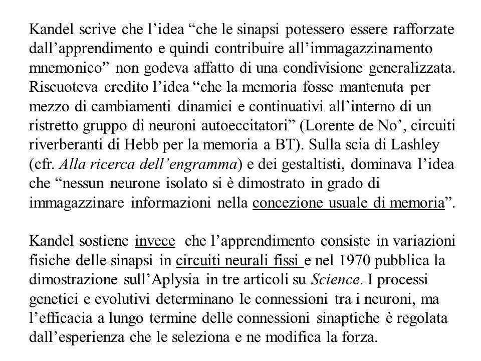 Kandel scrive che l'idea che le sinapsi potessero essere rafforzate dall'apprendimento e quindi contribuire all'immagazzinamento mnemonico non godeva affatto di una condivisione generalizzata.