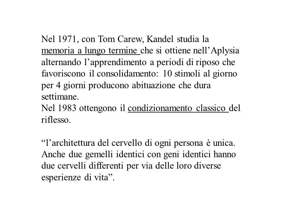 Nel 1971, con Tom Carew, Kandel studia la memoria a lungo termine che si ottiene nell'Aplysia alternando l'apprendimento a periodi di riposo che favor