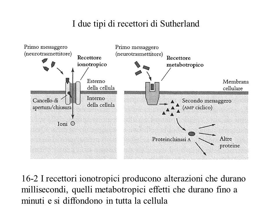 I due tipi di recettori di Sutherland 16-2 I recettori ionotropici producono alterazioni che durano millisecondi, quelli metabotropici effetti che durano fino a minuti e si diffondono in tutta la cellula