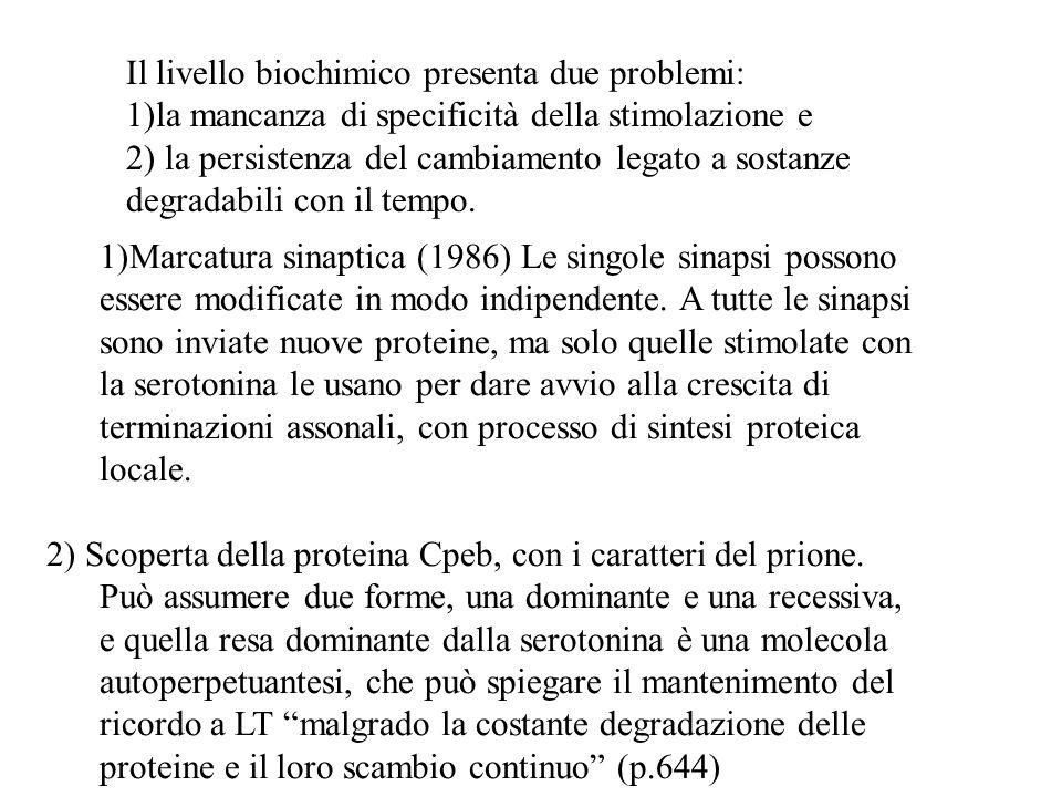 1)Marcatura sinaptica (1986) Le singole sinapsi possono essere modificate in modo indipendente. A tutte le sinapsi sono inviate nuove proteine, ma sol
