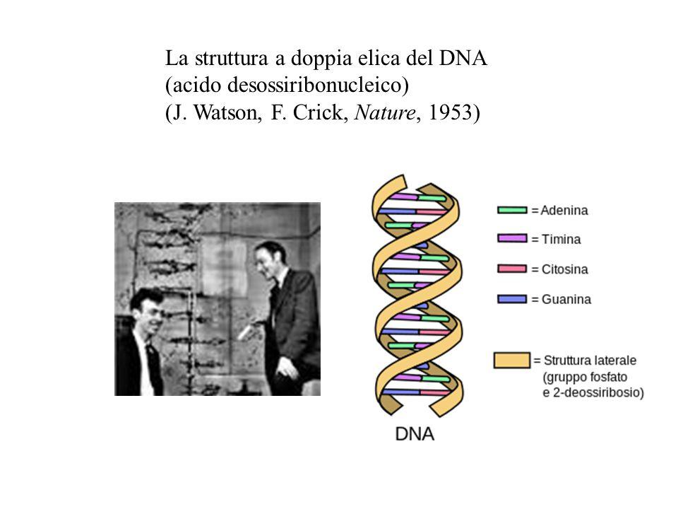 La struttura a doppia elica del DNA (acido desossiribonucleico) (J. Watson, F. Crick, Nature, 1953)
