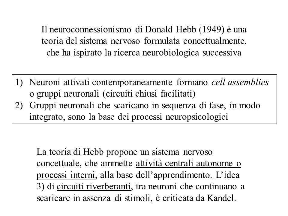 Il neuroconnessionismo di Donald Hebb (1949) è una teoria del sistema nervoso formulata concettualmente, che ha ispirato la ricerca neurobiologica suc