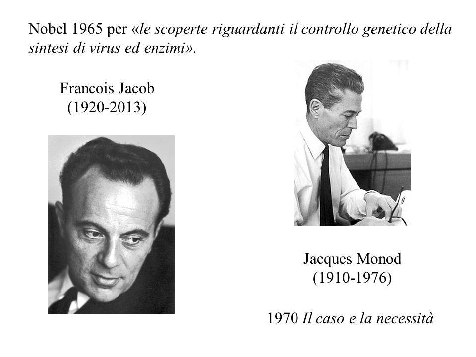 Francois Jacob (1920-2013) Jacques Monod (1910-1976) Nobel 1965 per «le scoperte riguardanti il controllo genetico della sintesi di virus ed enzimi».