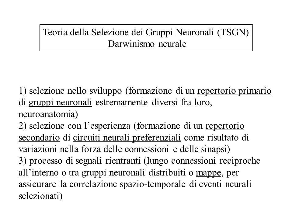 Teoria della Selezione dei Gruppi Neuronali (TSGN) Darwinismo neurale 1) selezione nello sviluppo (formazione di un repertorio primario di gruppi neuronali estremamente diversi fra loro, neuroanatomia) 2) selezione con l'esperienza (formazione di un repertorio secondario di circuiti neurali preferenziali come risultato di variazioni nella forza delle connessioni e delle sinapsi) 3) processo di segnali rientranti (lungo connessioni reciproche all'interno o tra gruppi neuronali distribuiti o mappe, per assicurare la correlazione spazio-temporale di eventi neurali selezionati)