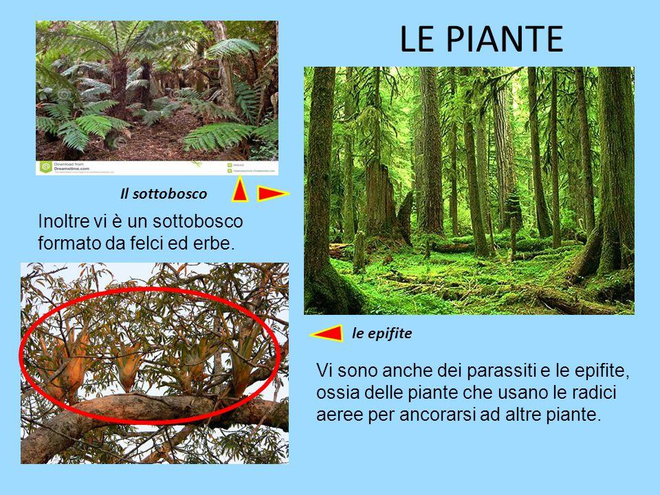 LE PIANTE La vegetazione è rigogliosa e spesso impenetrabile per le radici e le liane dei vari alberi. Gli alberi sono di varie altezze: raggiungono a