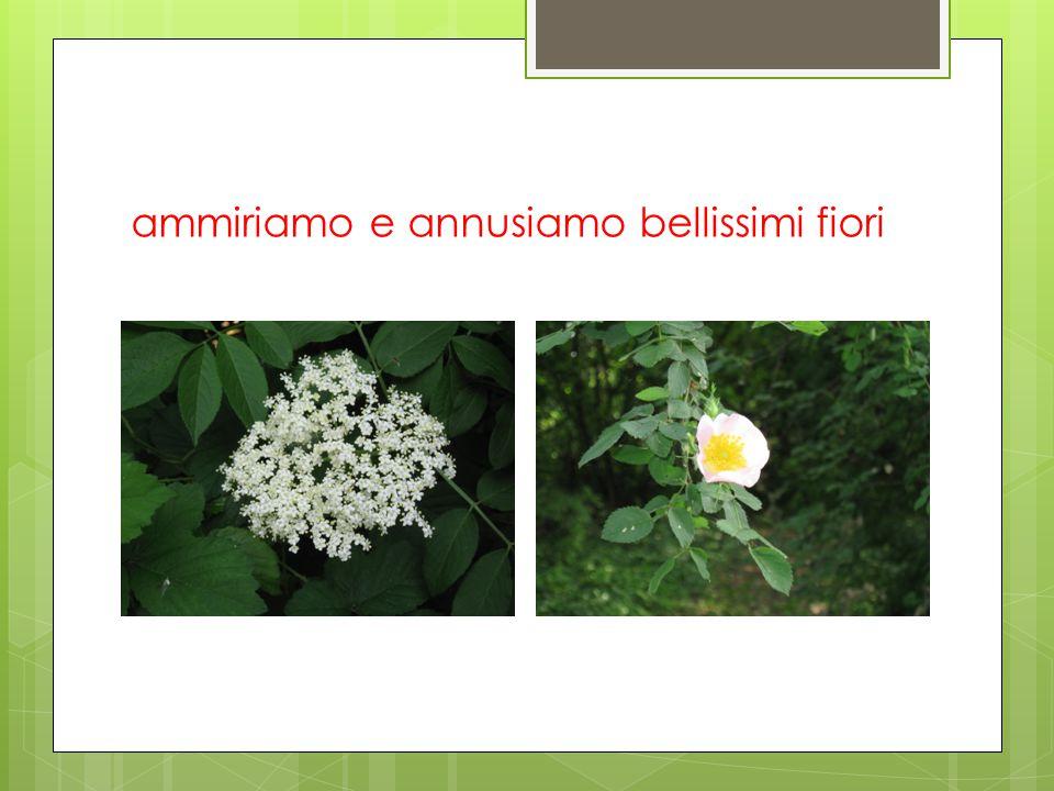 ammiriamo e annusiamo bellissimi fiori