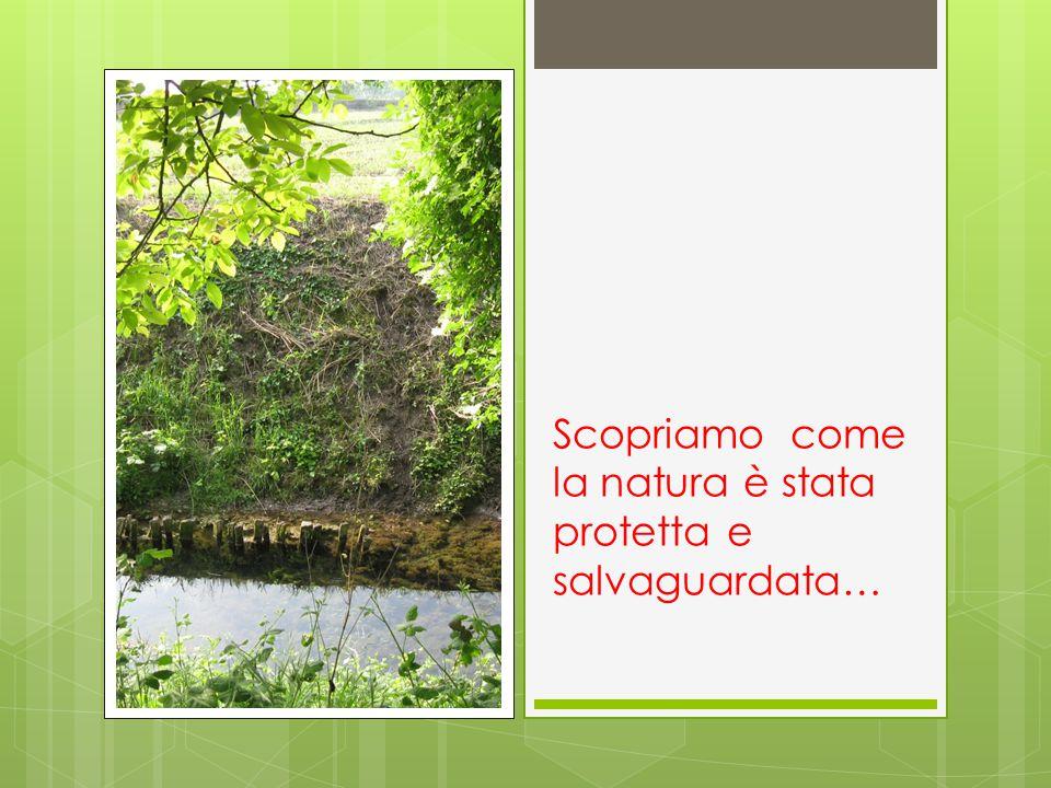Scopriamo come la natura è stata protetta e salvaguardata…