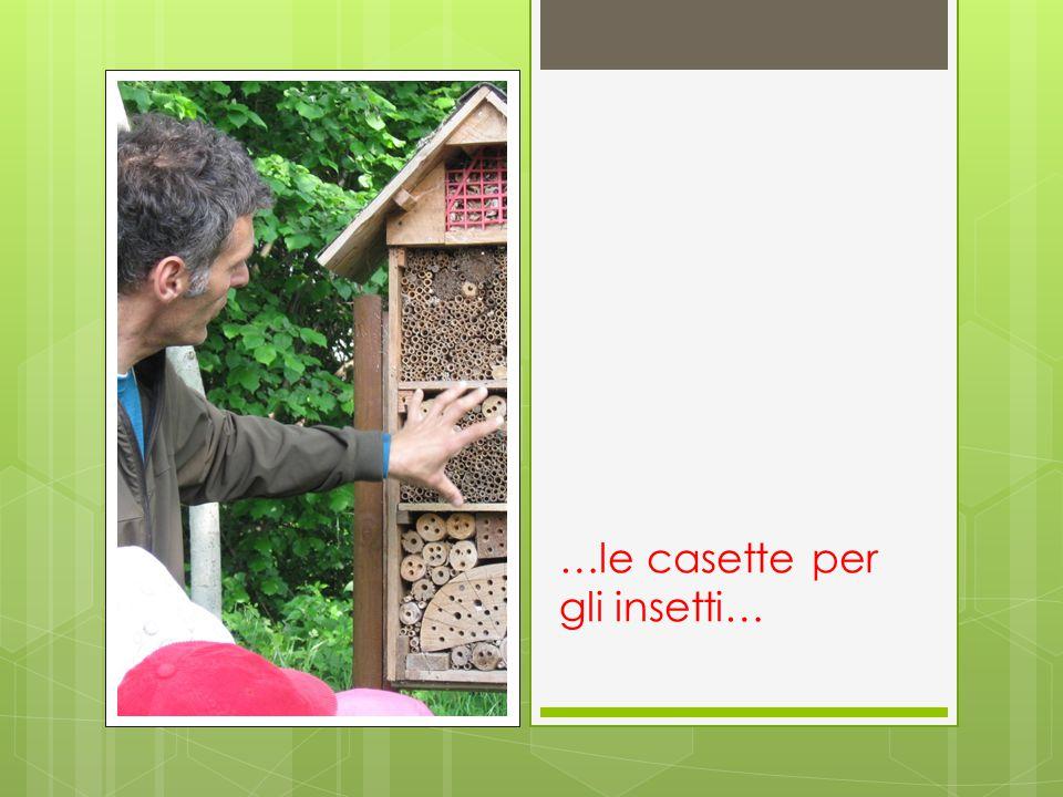 …le casette per gli insetti…