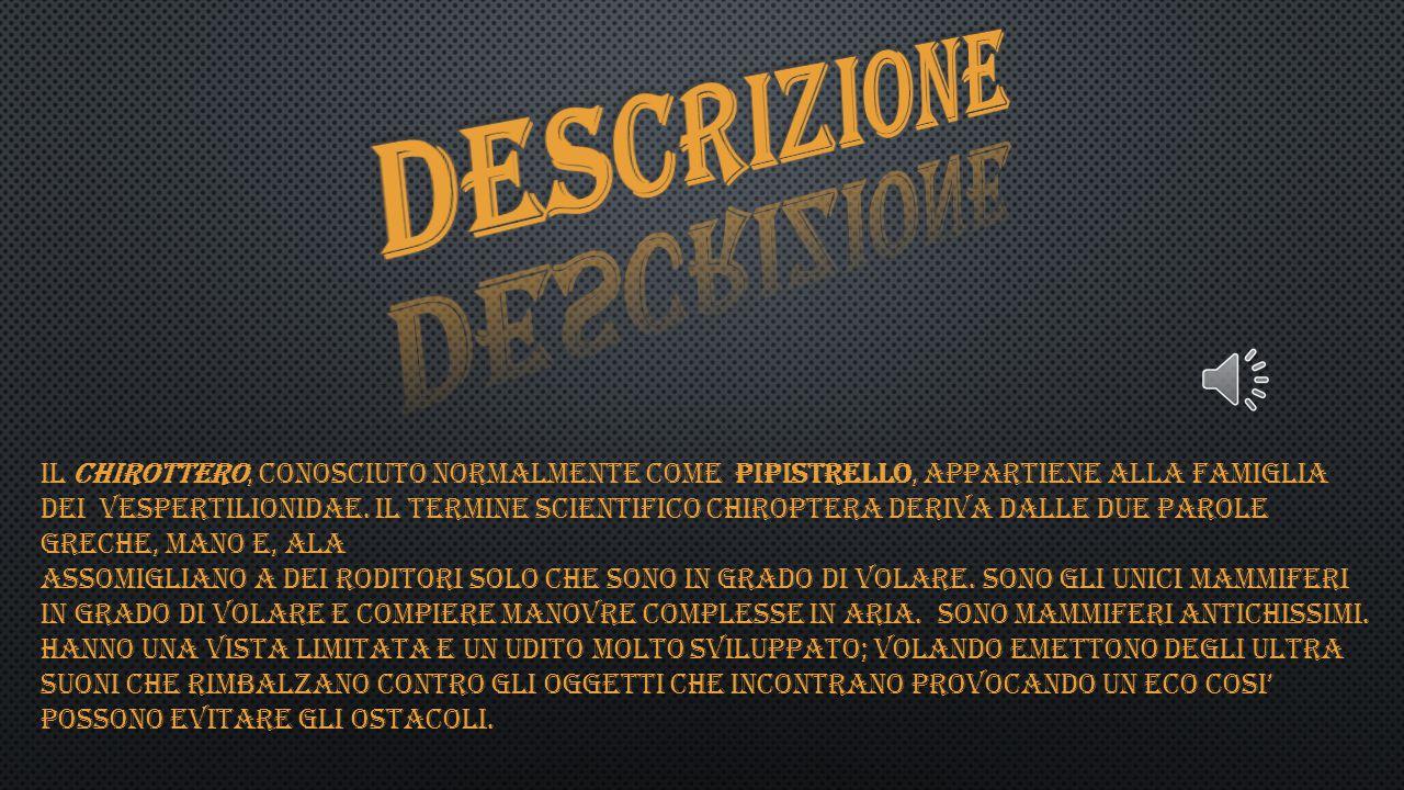 IL CHIROTTERO, CONOSCIUTO NORMALMENTE COME PIPISTRELLO, APPARTIENE ALLA FAMIGLIA DEI VESPERTILIONIDAE.