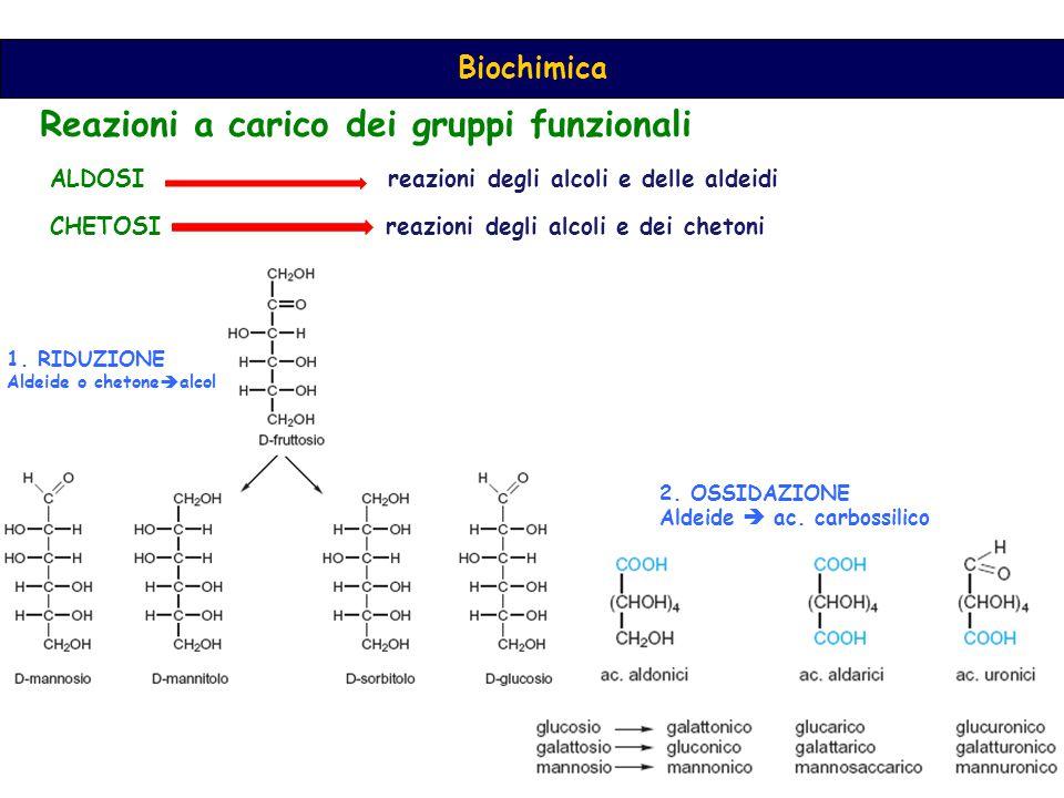 ALDOSI reazioni degli alcoli e delle aldeidi CHETOSI reazioni degli alcoli e dei chetoni 1.