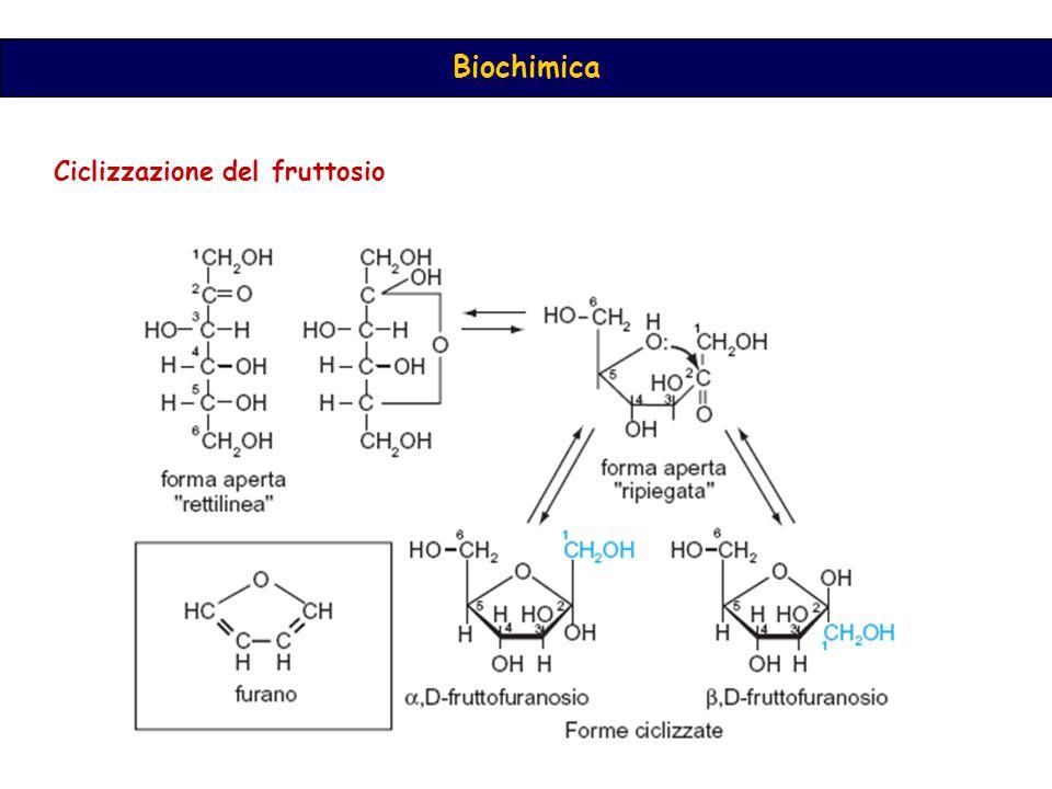 Biochimica Ciclizzazione del fruttosio