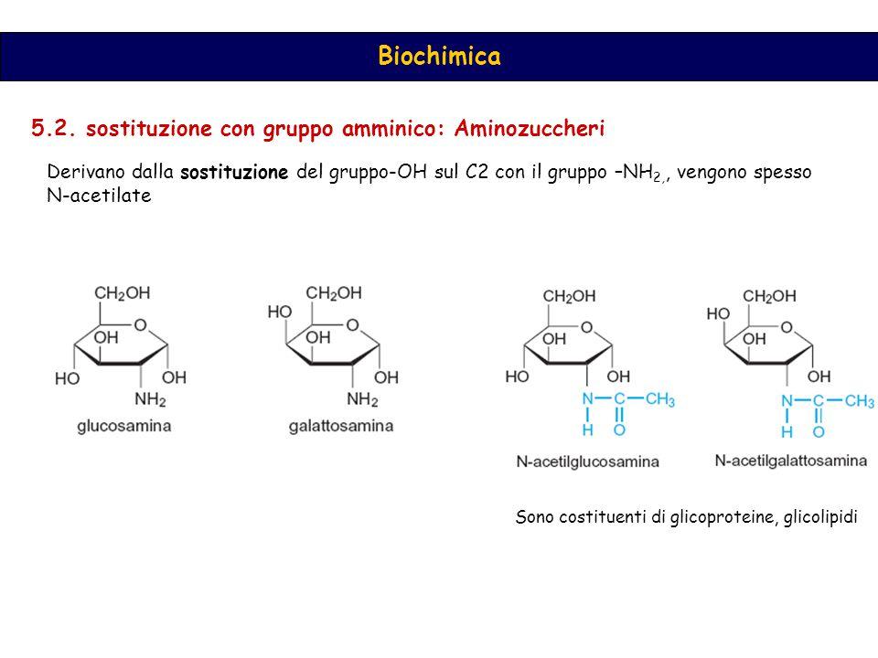 Biochimica 5.2.