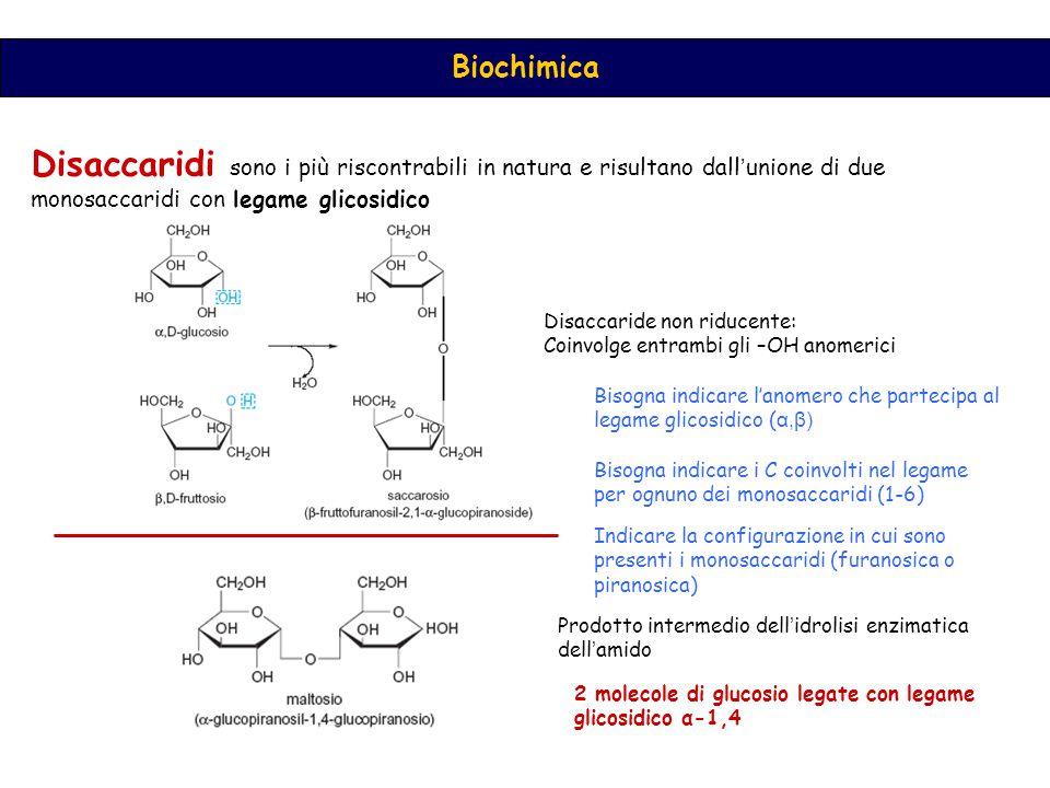 Biochimica Disaccaridi sono i più riscontrabili in natura e risultano dall ' unione di due monosaccaridi con legame glicosidico Disaccaride non riducente: Coinvolge entrambi gli –OH anomerici Prodotto intermedio dell ' idrolisi enzimatica dell ' amido 2 molecole di glucosio legate con legame glicosidico α-1,4 Bisogna indicare l'anomero che partecipa al legame glicosidico ( α,β) Bisogna indicare i C coinvolti nel legame per ognuno dei monosaccaridi (1-6) Indicare la configurazione in cui sono presenti i monosaccaridi (furanosica o piranosica)