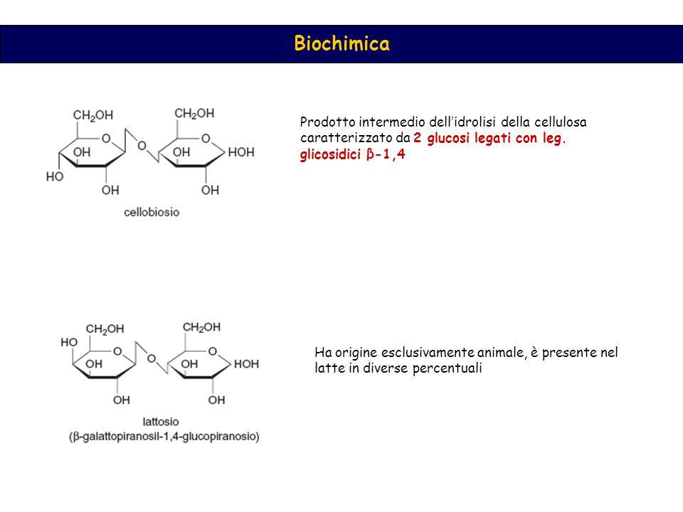 Biochimica Prodotto intermedio dell'idrolisi della cellulosa caratterizzato da 2 glucosi legati con leg.