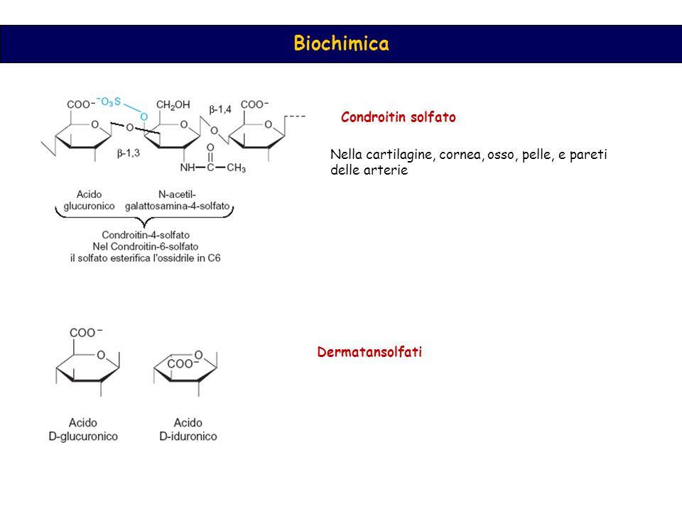 Biochimica Condroitin solfato Nella cartilagine, cornea, osso, pelle, e pareti delle arterie Dermatansolfati