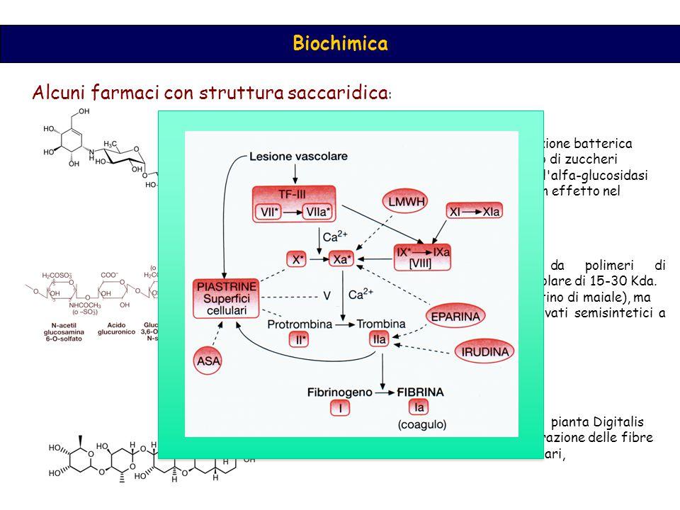 Biochimica Alcuni farmaci con struttura saccaridica : L acarbosio, è una molecola di derivazione batterica ritarda la digestione e l assorbimento di zuccheri alimentari in quanto è un inibitore dell alfa-glucosidasi intestinale, per tale meccanismo ha un effetto nel ridurre la glicemia post-prandiale Le eparine sono costituite da polimeri di glucosamminoglicano con peso molecolare di 15-30 Kda.