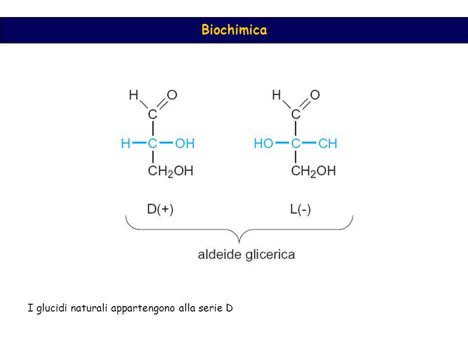 Biochimica I glucidi naturali appartengono alla serie D