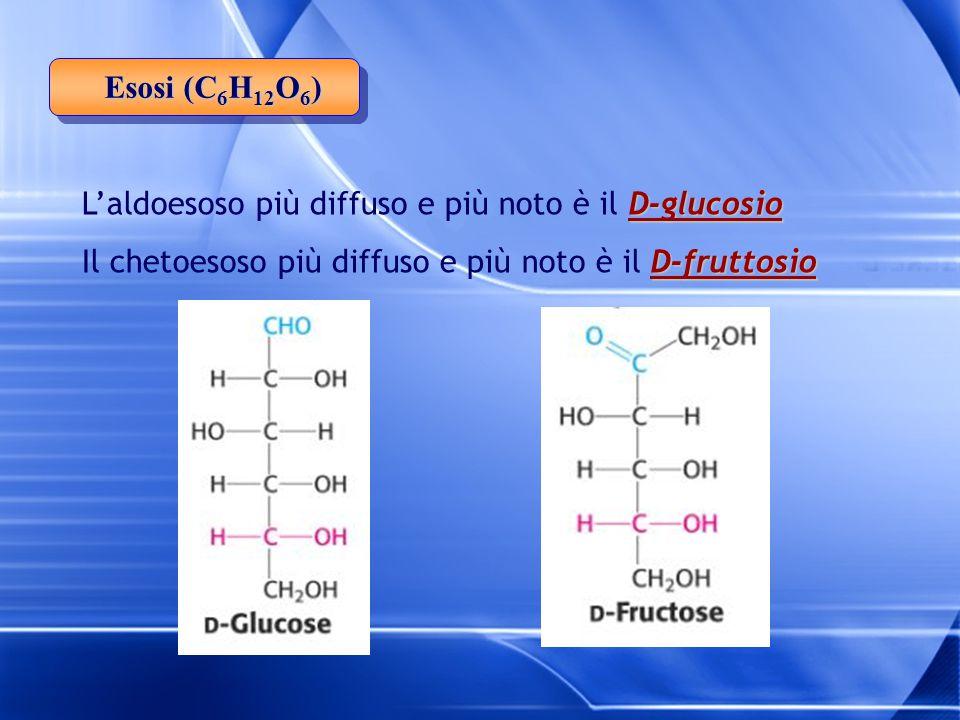 D-glucosio L'aldoesoso più diffuso e più noto è il D-glucosio D-fruttosio Il chetoesoso più diffuso e più noto è il D-fruttosio Esosi (C 6 H 12 O 6 )