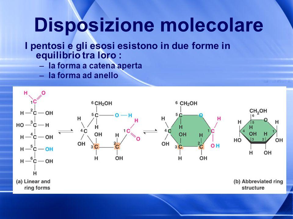 Disposizione molecolare I pentosi e gli esosi esistono in due forme in equilibrio tra loro : –la forma a catena aperta –la forma ad anello