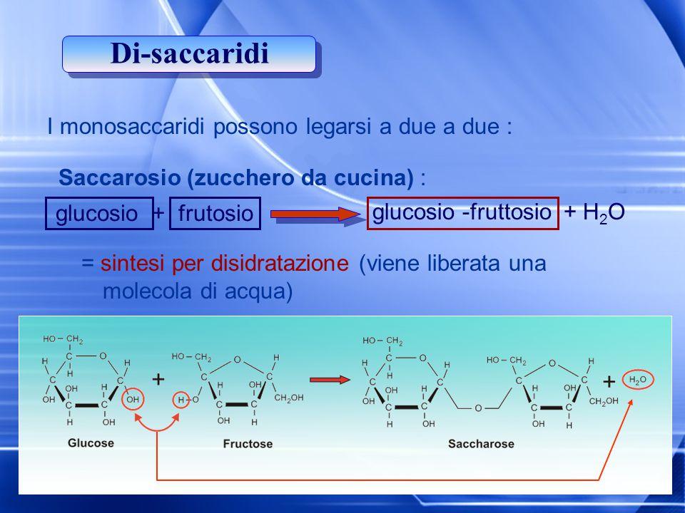 I monosaccaridi possono legarsi a due a due : Saccarosio (zucchero da cucina) : glucosio + frutosio glucosio -fruttosio + H 2 O = sintesi per disidrat