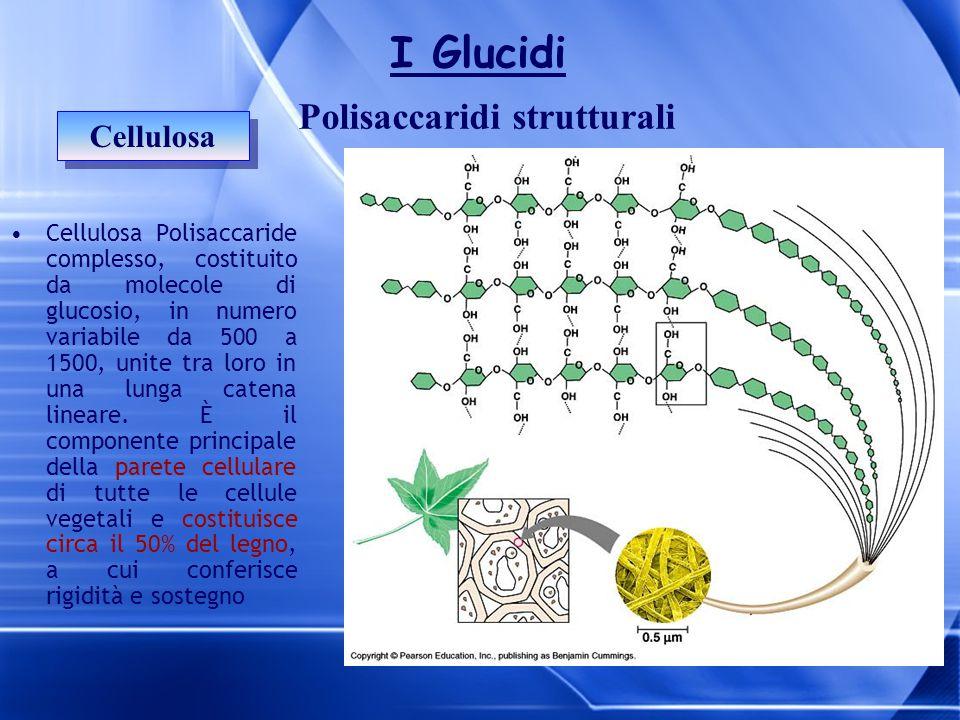 Cellulosa Polisaccaridi strutturali I Glucidi Cellulosa Polisaccaride complesso, costituito da molecole di glucosio, in numero variabile da 500 a 1500