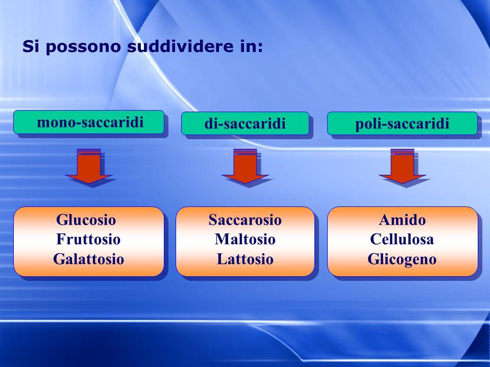 Si possono suddividere in: mono-saccaridi poli-saccarididi-saccaridi Glucosio Fruttosio Galattosio Saccarosio Maltosio Lattosio Amido Cellulosa Glicog