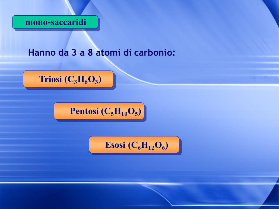 mono-saccaridi Hanno da 3 a 8 atomi di carbonio: Triosi (C 3 H 6 O 3 ) Pentosi (C 5 H 10 O 5 ) Esosi (C 6 H 12 O 6 )