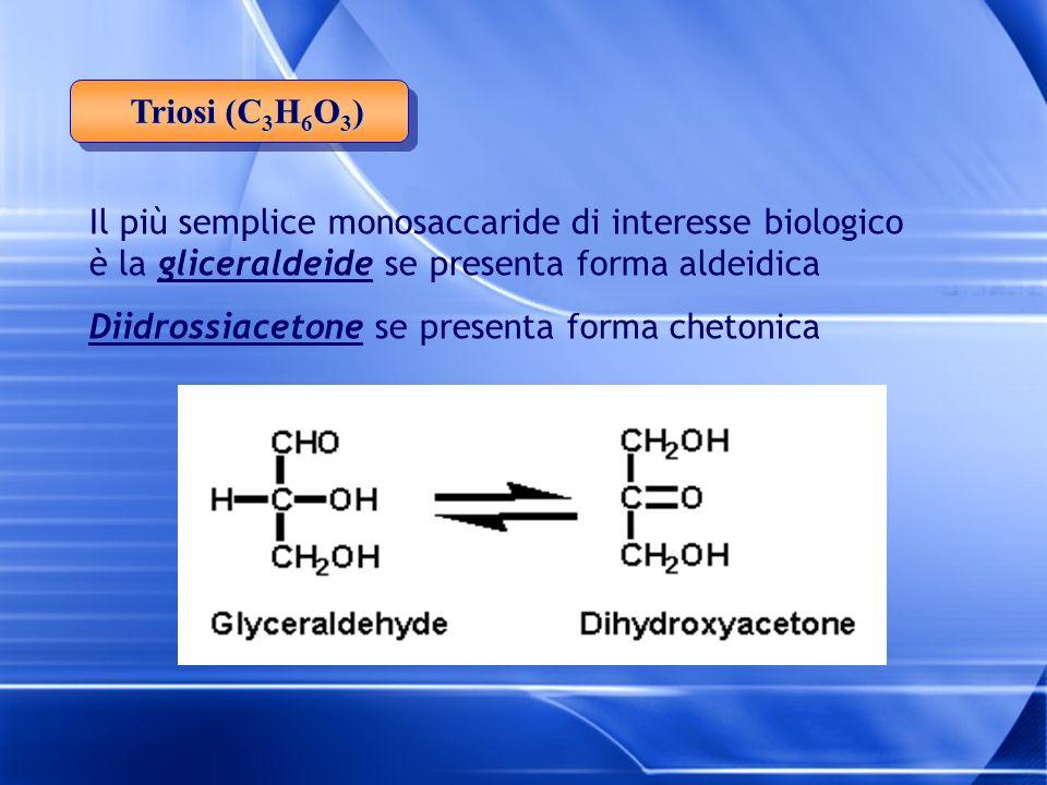 Triosi (C 3 H 6 O 3 ) Il più semplice monosaccaride di interesse biologico è la gliceraldeide se presenta forma aldeidica Diidrossiacetone se presenta