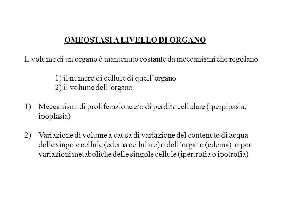 OMEOSTASI A LIVELLO DI ORGANO Il volume di un organo è mantenuto costante da meccanismi che regolano 1) il numero di cellule di quell'organo 2) il vol