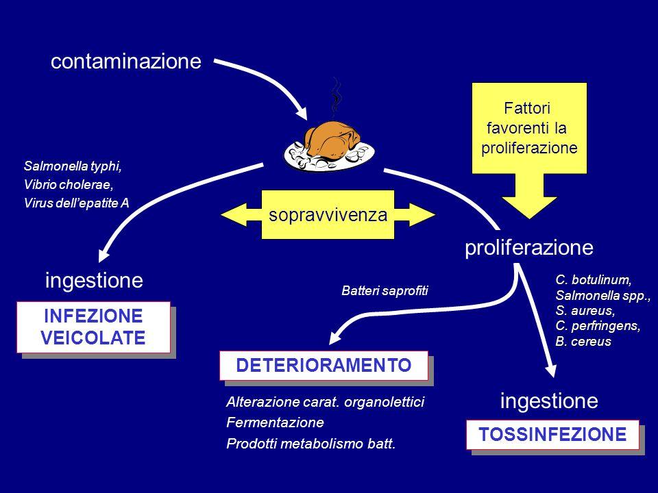 contaminazione ingestione proliferazione ingestione TOSSINFEZIONE INFEZIONE VEICOLATE sopravvivenza Fattori favorenti la proliferazione Salmonella typ