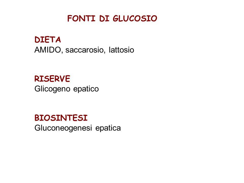 FONTI DI GLUCOSIO DIETA AMIDO, saccarosio, lattosio RISERVE Glicogeno epatico BIOSINTESI Gluconeogenesi epatica