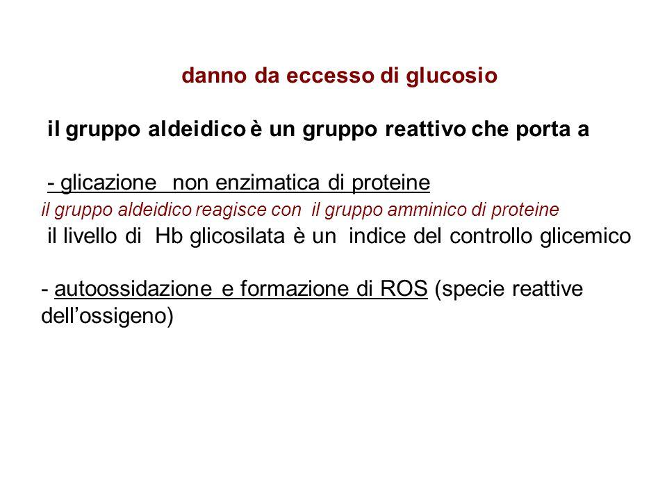 danno da eccesso di glucosio il gruppo aldeidico è un gruppo reattivo che porta a - glicazione non enzimatica di proteine il gruppo aldeidico reagisce con il gruppo amminico di proteine il livello di Hb glicosilata è un indice del controllo glicemico - autoossidazione e formazione di ROS (specie reattive dell'ossigeno)