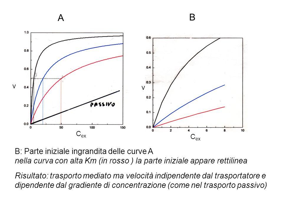 A B B: Parte iniziale ingrandita delle curve A nella curva con alta Km (in rosso ) la parte iniziale appare rettilinea Risultato: trasporto mediato ma velocità indipendente dal trasportatore e dipendente dal gradiente di concentrazione (come nel trasporto passivo) v C ex v