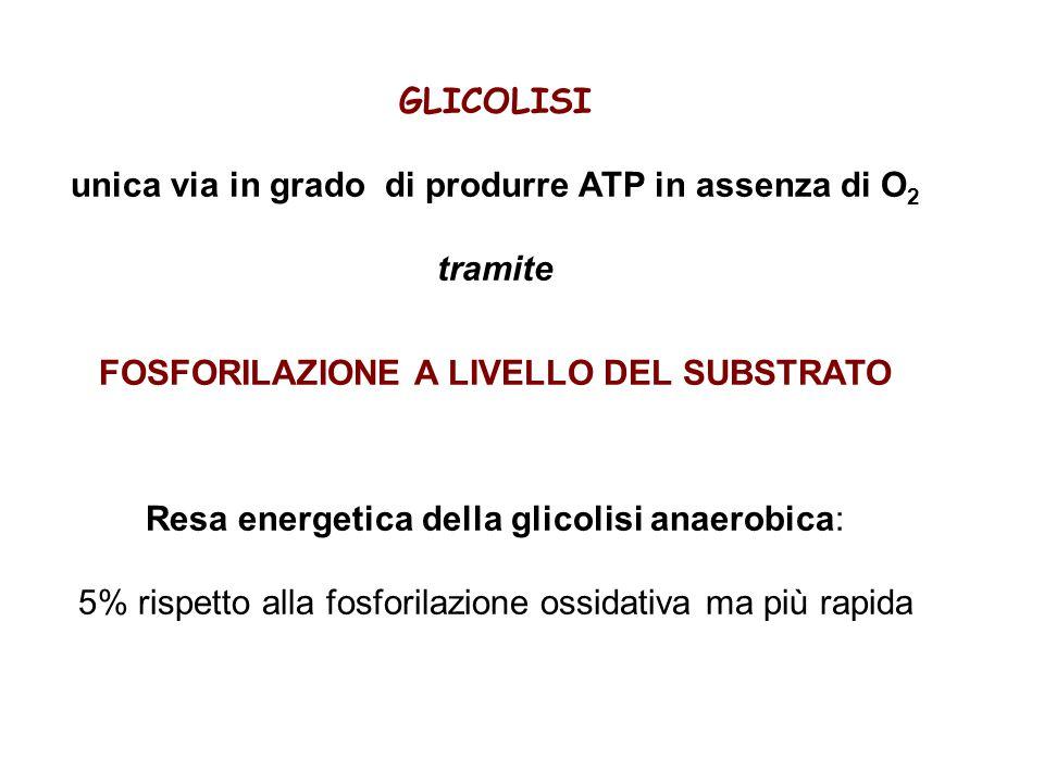 unica via in grado di produrre ATP in assenza di O 2 tramite FOSFORILAZIONE A LIVELLO DEL SUBSTRATO Resa energetica della glicolisi anaerobica: 5% rispetto alla fosforilazione ossidativa ma più rapida