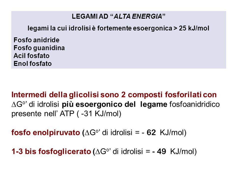 Intermedi della glicolisi sono 2 composti fosforilati con  G o ' di idrolisi più esoergonico del legame fosfoanidridico presente nell' ATP ( -31 KJ/mol) fosfo enolpiruvato (  G o ' di idrolisi = - 62 KJ/mol) 1-3 bis fosfoglicerato (  G o ' di idrolisi = - 49 KJ/mol) LEGAMI AD ALTA ENERGIA legami la cui idrolisi è fortemente esoergonica > 25 kJ/mol Fosfo anidride Fosfo guanidina Acil fosfato Enol fosfato