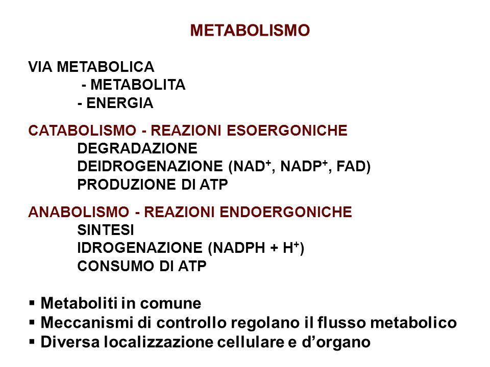 METABOLISMO VIA METABOLICA - METABOLITA - ENERGIA CATABOLISMO - REAZIONI ESOERGONICHE DEGRADAZIONE DEIDROGENAZIONE (NAD +, NADP +, FAD) PRODUZIONE DI ATP ANABOLISMO - REAZIONI ENDOERGONICHE SINTESI IDROGENAZIONE (NADPH + H + ) CONSUMO DI ATP  Metaboliti in comune  Meccanismi di controllo regolano il flusso metabolico  Diversa localizzazione cellulare e d'organo
