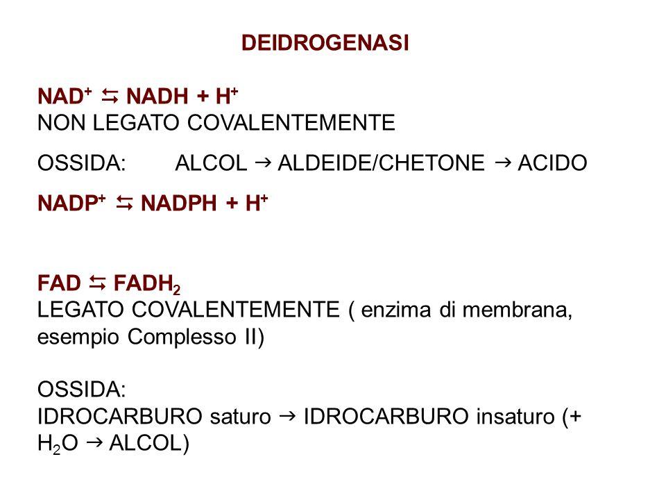 DEIDROGENASI NAD +  NADH + H + NON LEGATO COVALENTEMENTE OSSIDA: ALCOL  ALDEIDE/CHETONE  ACIDO NADP +  NADPH + H + FAD  FADH 2 LEGATO COVALENTEMENTE ( enzima di membrana, esempio Complesso II) OSSIDA: IDROCARBURO saturo  IDROCARBURO insaturo (+ H 2 O  ALCOL)