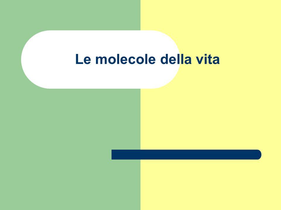 Le molecole della vita