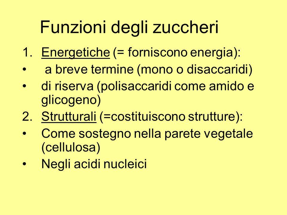 Funzioni degli zuccheri 1.Energetiche (= forniscono energia): a breve termine (mono o disaccaridi) di riserva (polisaccaridi come amido e glicogeno) 2