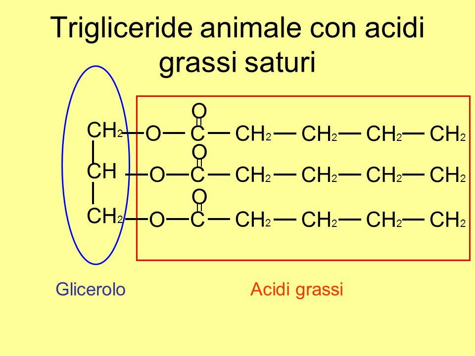 Trigliceride animale con acidi grassi saturi O CH 2 CH CH 2 O O C C C O O O Acidi grassiGlicerolo