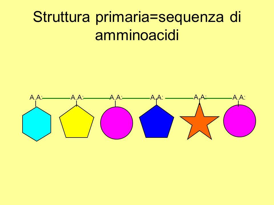 Struttura primaria=sequenza di amminoacidi A.A: