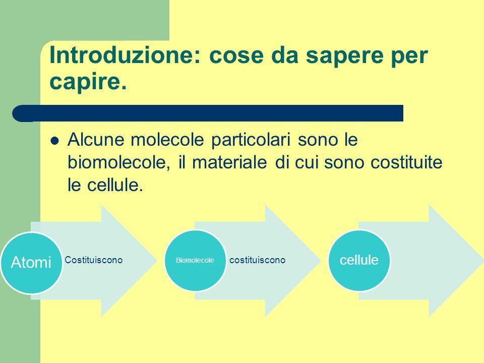 2.Strutturali: Molte strutture della cellula sono fatte di proteine: i canali che permettono l'ingresso di molecole utili nella cellula, lo scheletro cellulare, etc.
