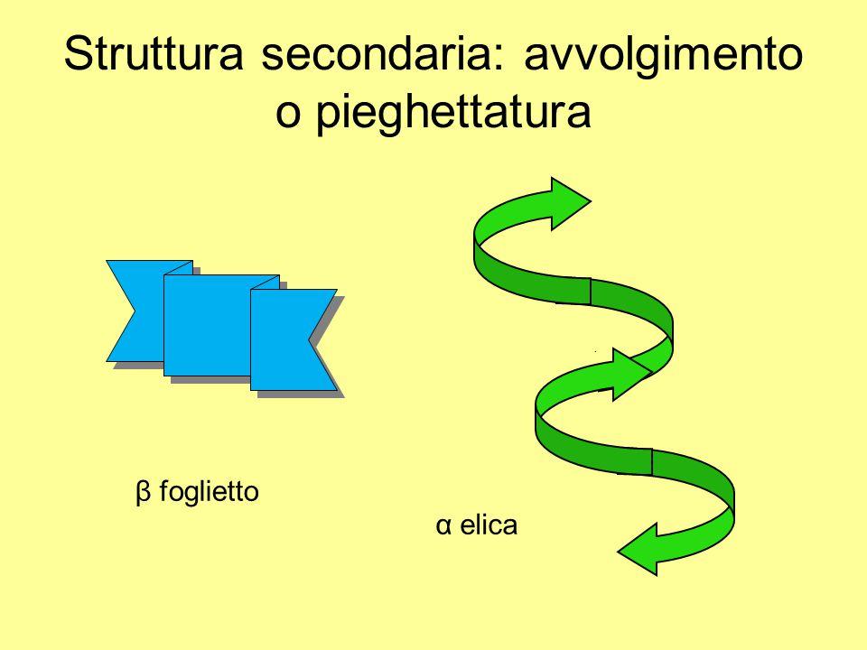 Struttura secondaria: avvolgimento o pieghettatura β foglietto α elica